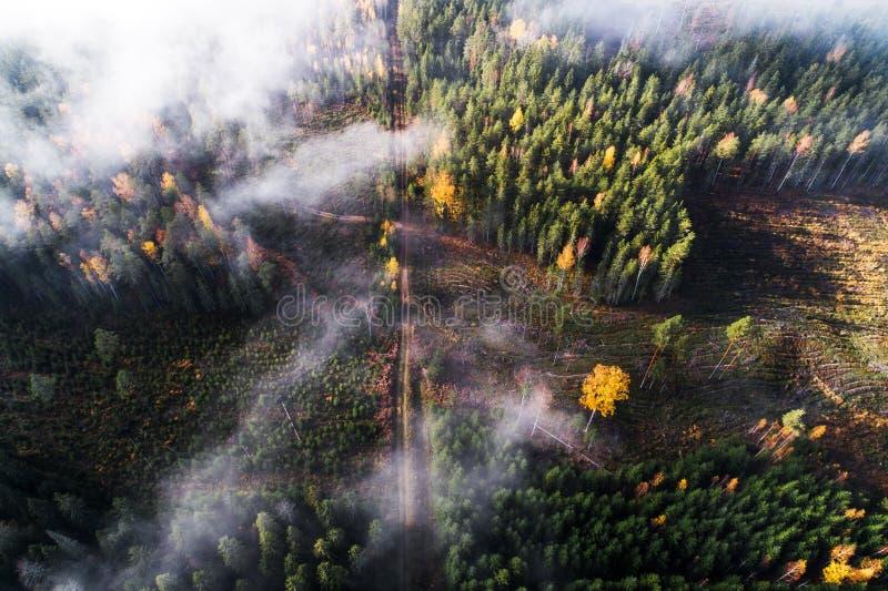 在早晨雾和光的清楚区域 免版税库存图片