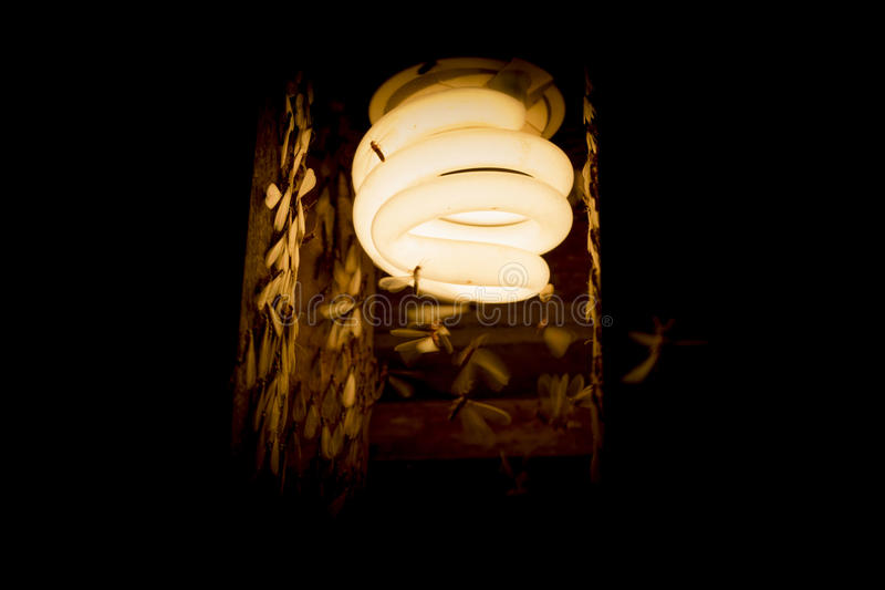 在早期的雨季的灯 免版税图库摄影