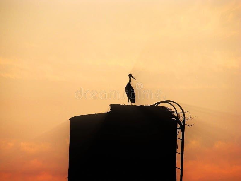在明亮的日落的背景的鸟鹳 库存照片
