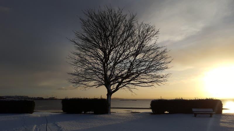 在明亮的毛皮红色星期日之上日落冠上结构树冬天 免版税库存照片