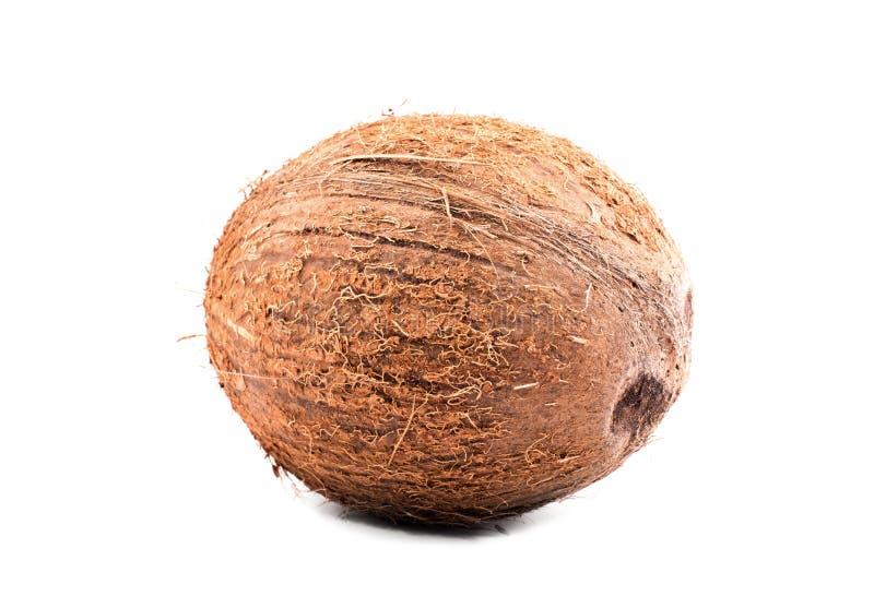 在明亮的白色的特写镜头坚硬棕色椰子隔绝了背景 一枚整个坚果 雅致的热带坚果 有机食品 库存照片