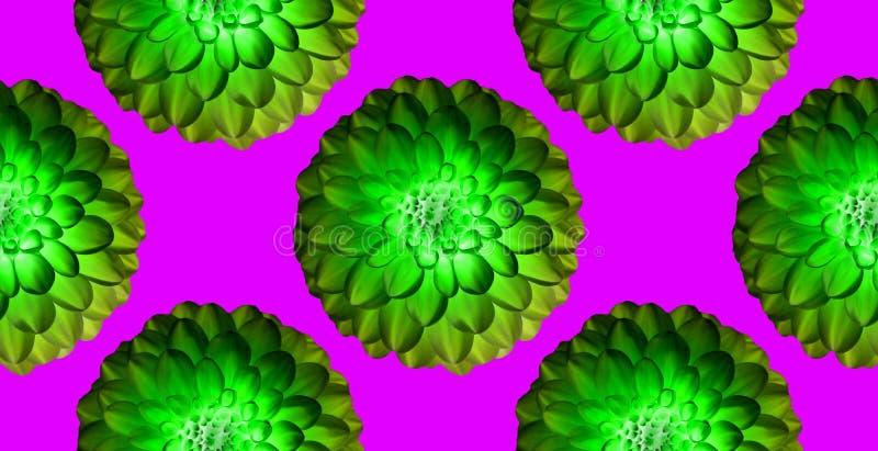 在明亮的粉色背景的绿色菊花 无缝的模式 拼贴画艺术性的例证 免版税库存照片