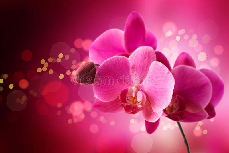 在明亮的背景的兰花 免版税库存照片