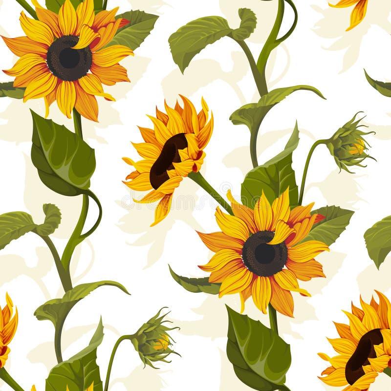 在明亮的背景的向日葵传染媒介无缝的样式花卉纹理 向量例证