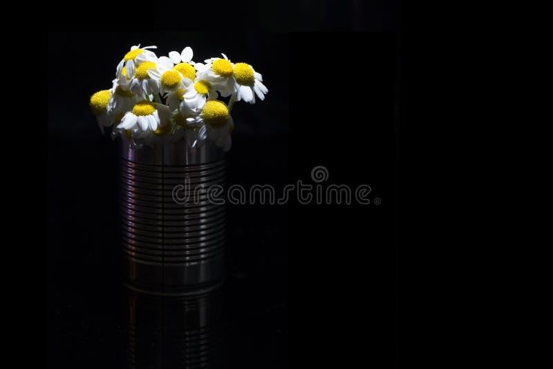 在明亮的锡罐里面的雏菊,在黑暗的背景 图库摄影