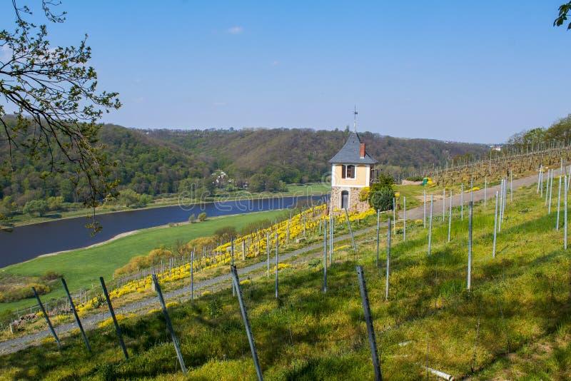 在易北河的葡萄酒增长区域在萨克森 图库摄影