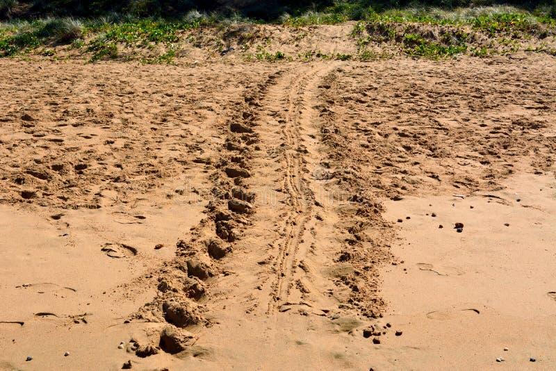 在星期一回购海滩的乌龟轨道在昆士兰,澳大利亚 免版税图库摄影