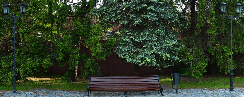 Download 在春天有两街灯、杉木和红色增殖比的公园换下场 库存照片. 图片 包括有 胡同, 开放, 金黄, 绿色, 路灯柱 - 72366580