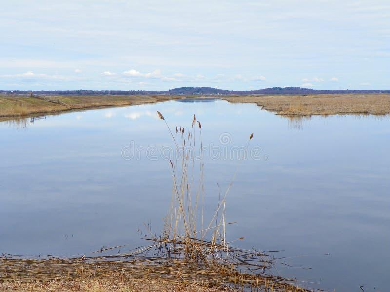 在春天期间的盐沼在李子海岛上 免版税图库摄影