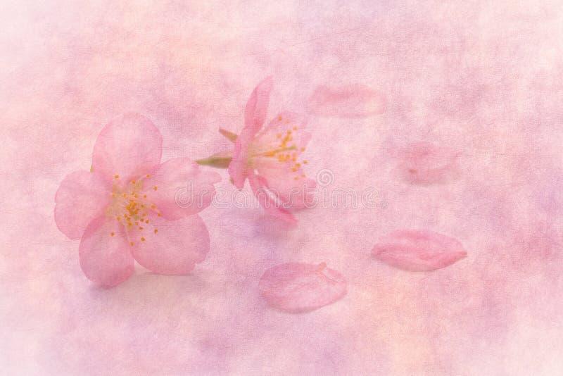 在春天桃红色纸背景的日本樱花 图库摄影