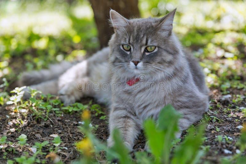 在春天的灰色街道猫特写镜头 免版税库存图片