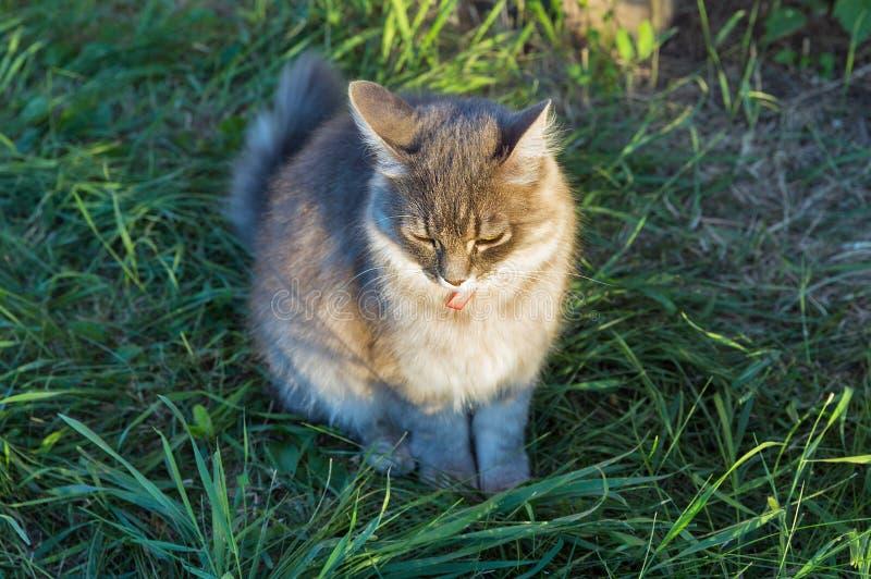 在春天的灰色街道猫特写镜头 库存图片
