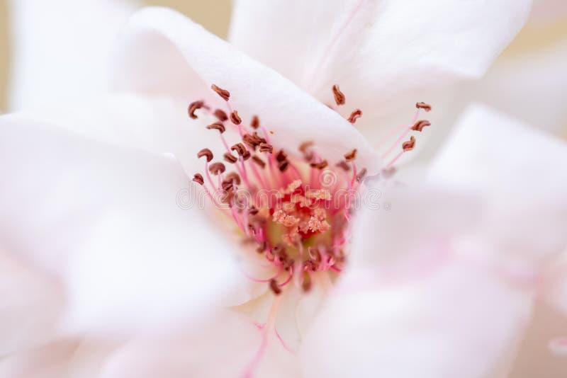 在春天自然地增长的花 免版税库存图片