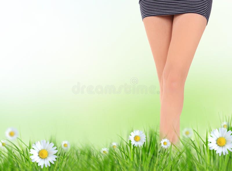 长的俏丽的妇女腿 免版税图库摄影