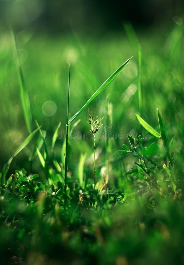 在春天草的抽象看法 库存图片