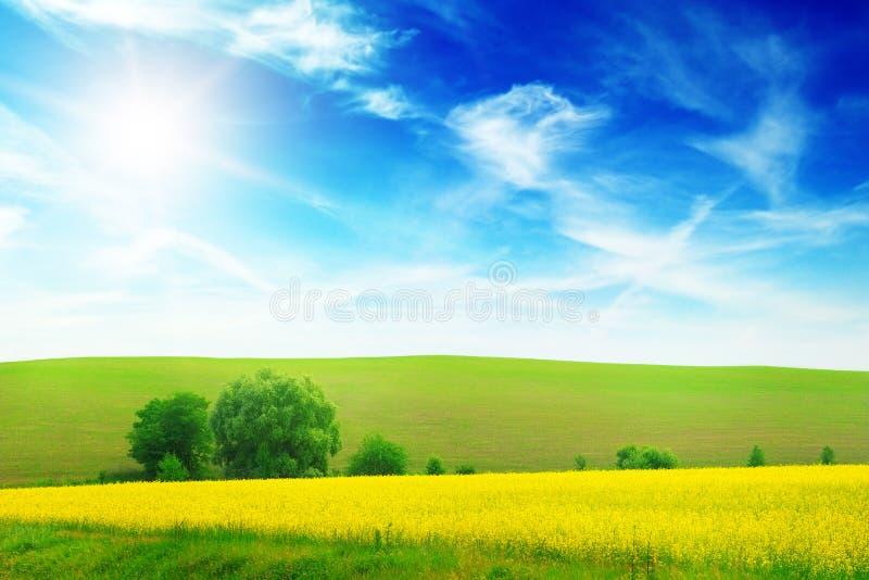 在春天领域的日落 免版税库存照片