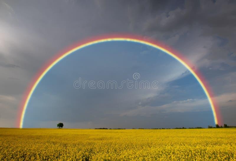 在春天风暴以后的彩虹 免版税库存图片