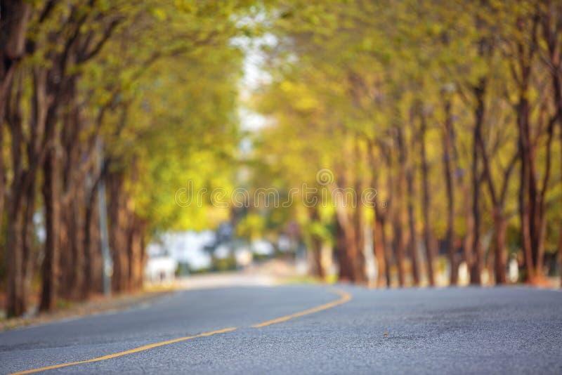 在春武里市泰国街道的流浪狗  免版税库存图片