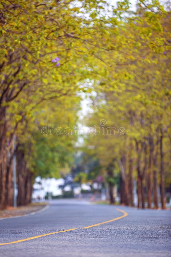 在春武里市泰国街道的流浪狗  免版税图库摄影
