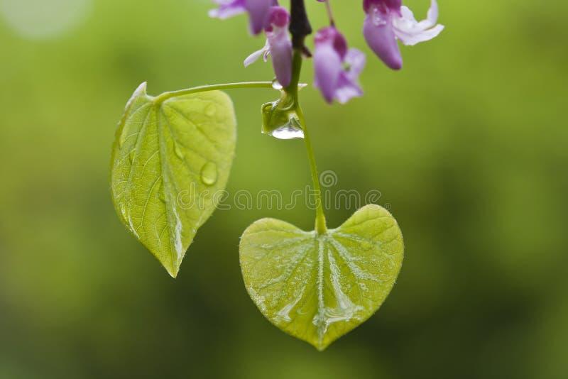 在春雨以后弄湿叶子 库存图片