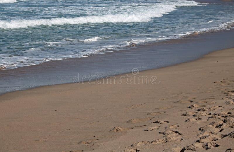 在显示湿沙子的海滩的泡沫似的回流 库存图片