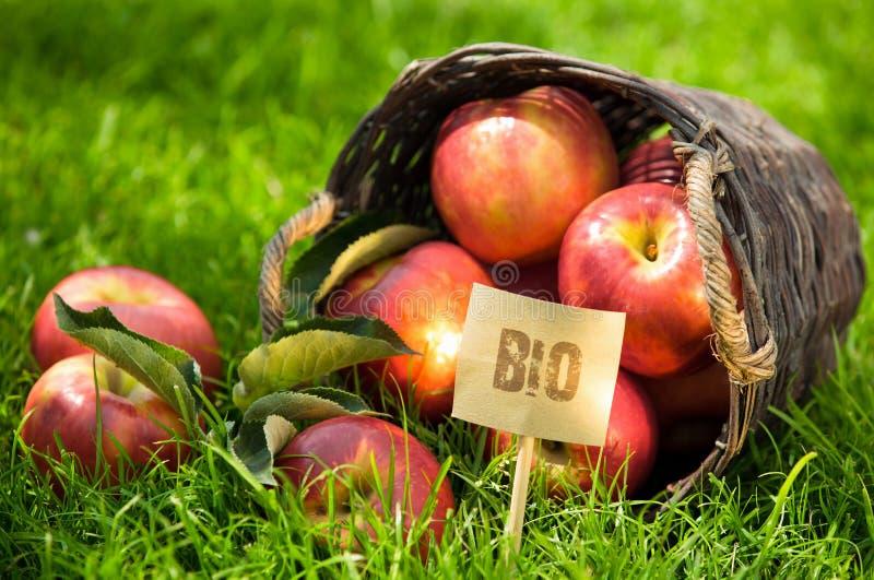 在显示的新鲜的生物苹果在市场上 免版税库存照片