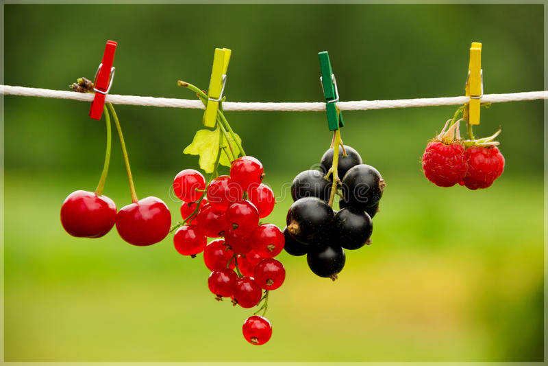 在晒衣夹的莓果 库存照片