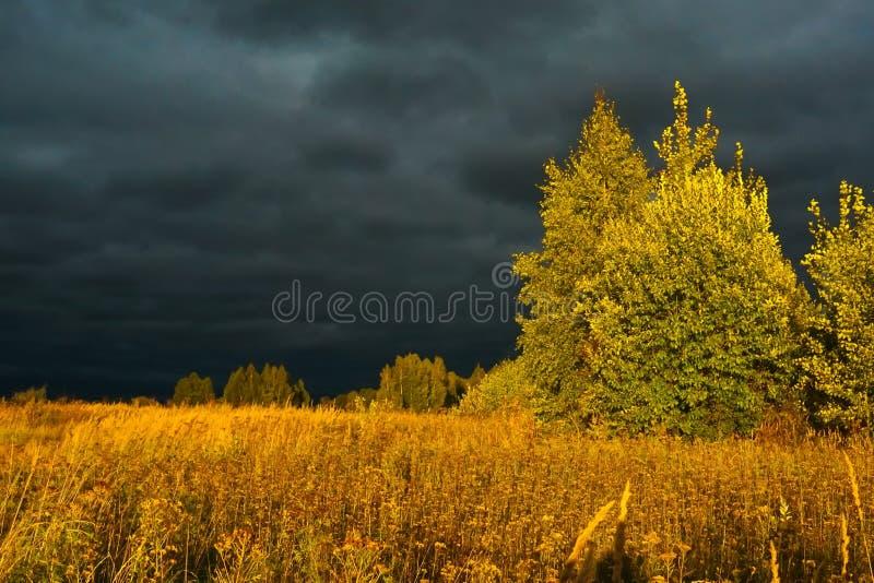 在晚上在大雨以后的森林里 免版税库存照片