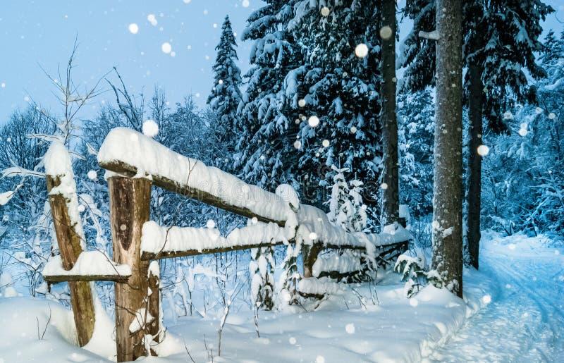 在晚上在美丽的俄国冬天森林里 免版税图库摄影