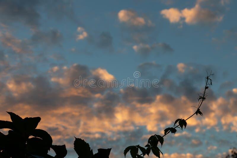 在晚上天空的现出轮廓的枝杈 免版税库存照片