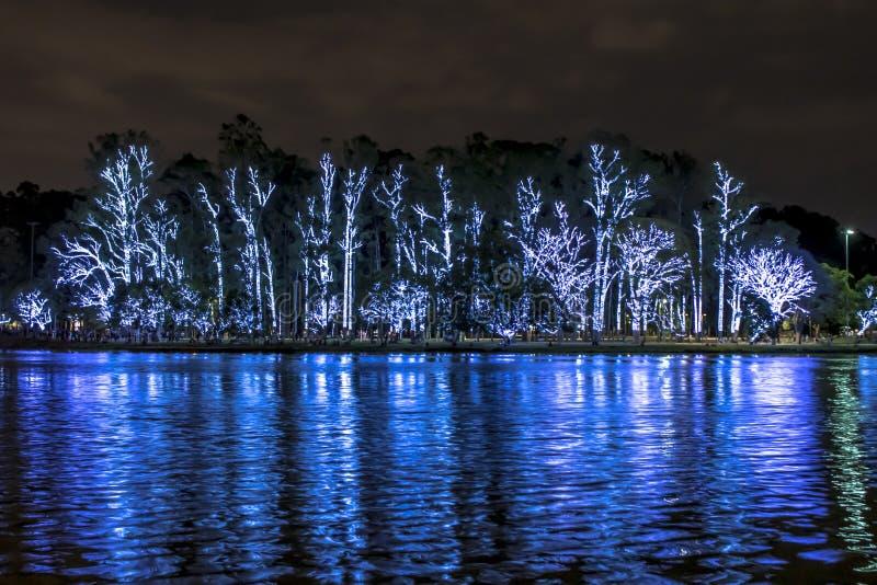 在晚上被照亮的圣诞树在圣保罗巴西 免版税库存图片