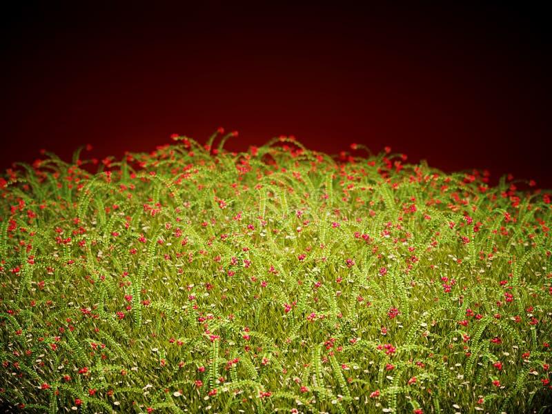 在晚霞的蔓越桔丛林 免版税图库摄影