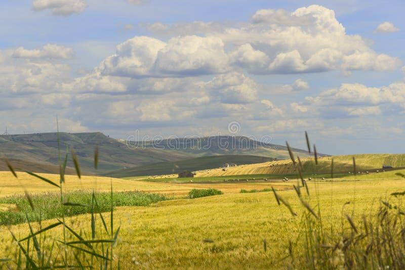 Download 在普利亚和巴斯利卡塔之间 与玉米田的多小山风景 意大利 库存照片 - 图片 包括有 问题的, 农舍: 72364788