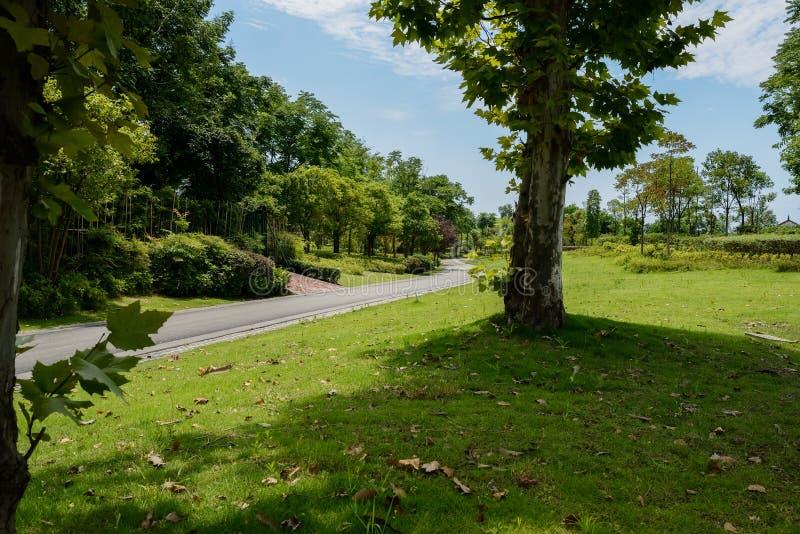 在晴朗的夏天下午植物和树的涂焦油方式  图库摄影