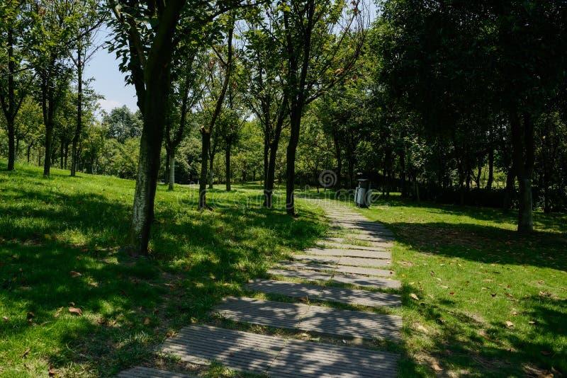 在晴朗的夏天草坪和树的石板道路  图库摄影