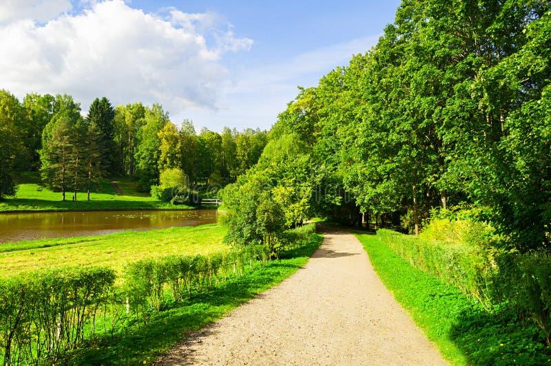 在晴朗的天气-生长在河的河岸的林木的夏天风景 免版税图库摄影