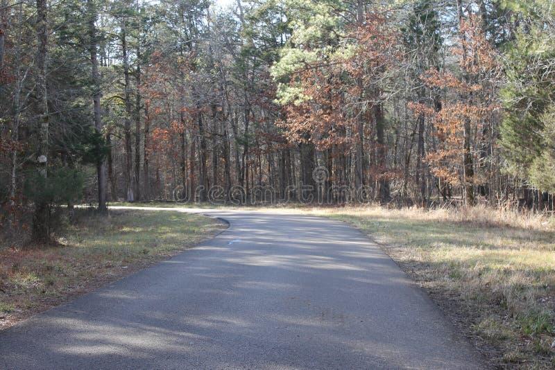 在晴朗的森林的路 库存照片