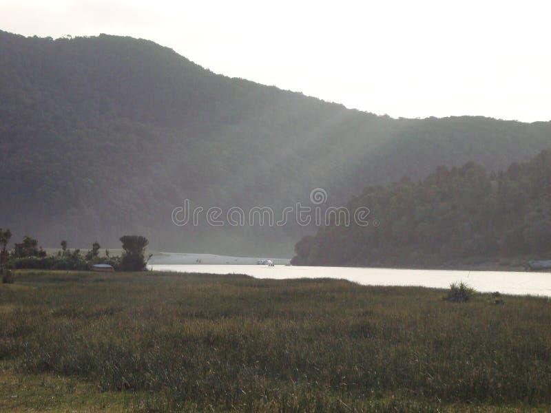 在智利南部的Caleta神鹰 免版税库存照片