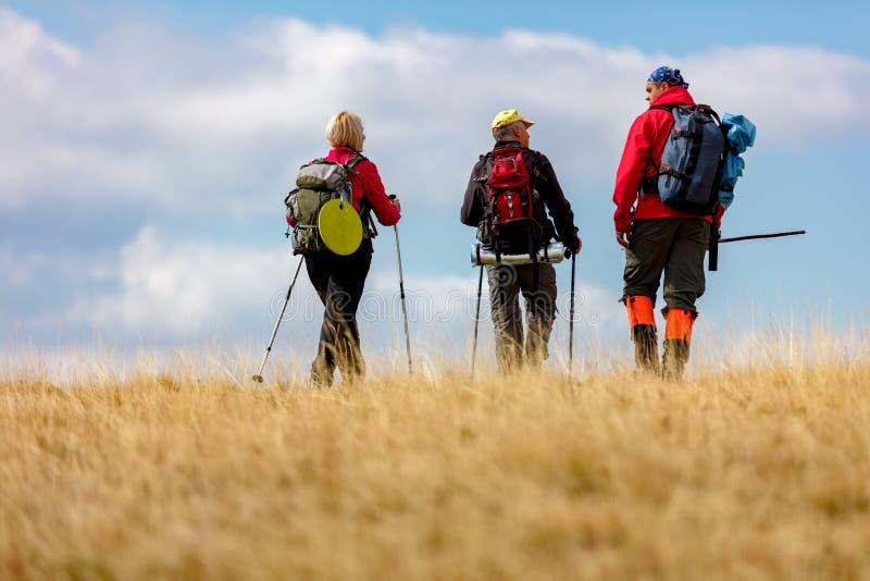 在暑假高涨期间,背面图射击了年轻朋友在乡下 走在自然的小组远足者 免版税库存照片