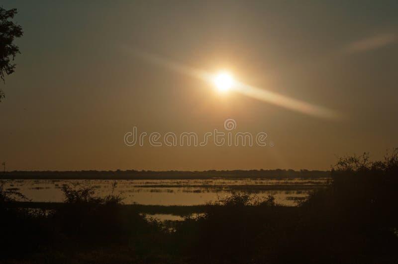 在暗淡的天空的落日在CHOBE河 库存图片