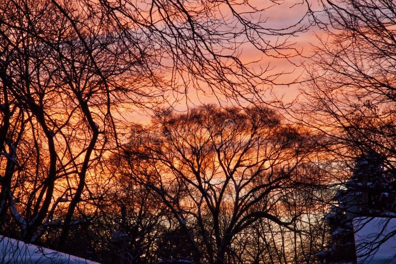 在暴风雪以后的日落发光红色和橙色在积雪的树和屋顶 免版税图库摄影