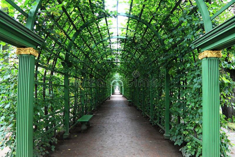 在曲拱下的大道与绿色植物 免版税库存照片