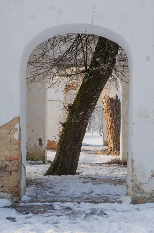 在曲拱的树在废墟 免版税库存图片