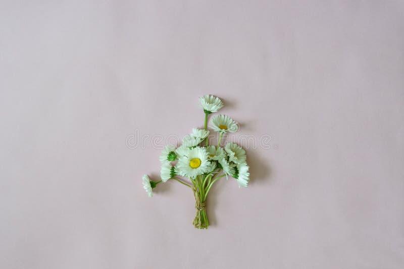 在最小的样式的夏天创造性的构成 白色延命菊d 免版税库存图片