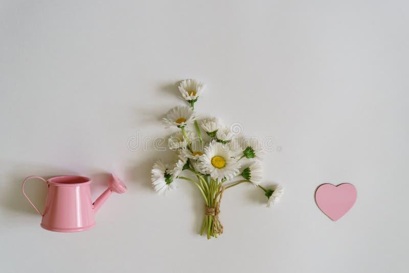 在最小的样式的夏天创造性的构成 白色延命菊d 图库摄影