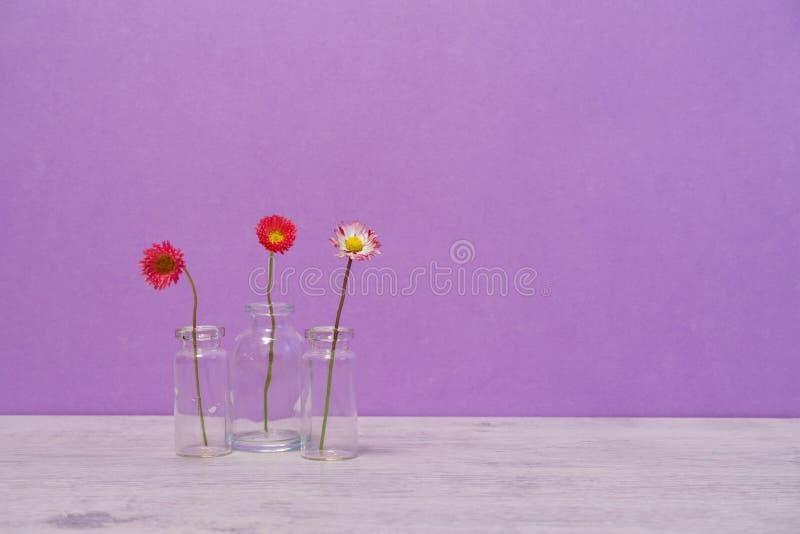 在最小的样式的夏天创造性的静物画 桃红色延命菊戴 免版税库存图片