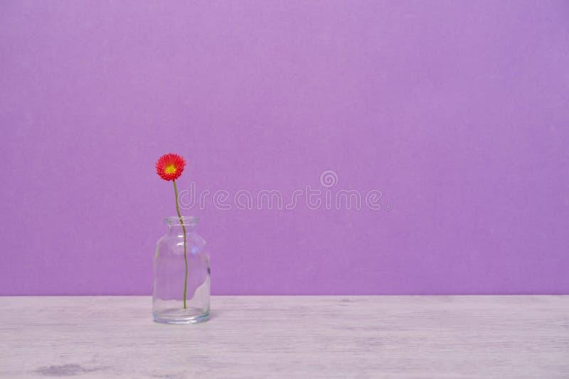 在最小的样式的夏天创造性的静物画 桃红色延命菊戴 库存照片