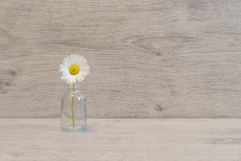 在最小的样式的夏天创造性的静物画 白色延命菊da 免版税库存图片