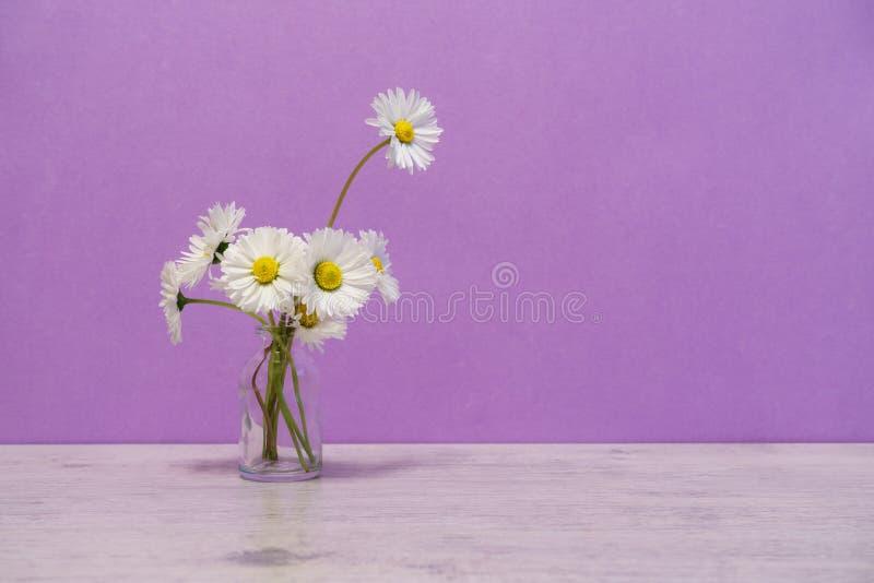 在最小的样式的夏天创造性的静物画 白色延命菊da 库存图片