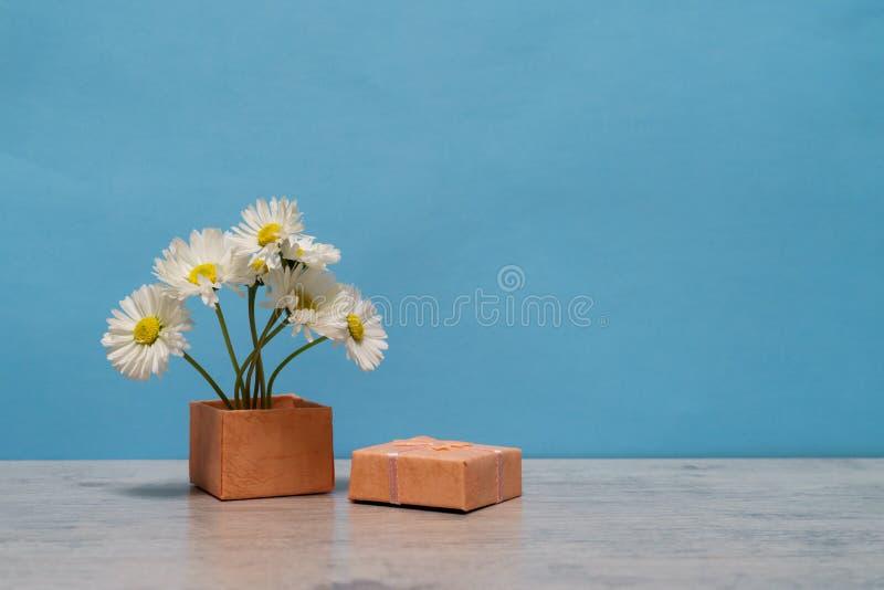 在最小的样式的夏天创造性的静物画 白色延命菊da 图库摄影